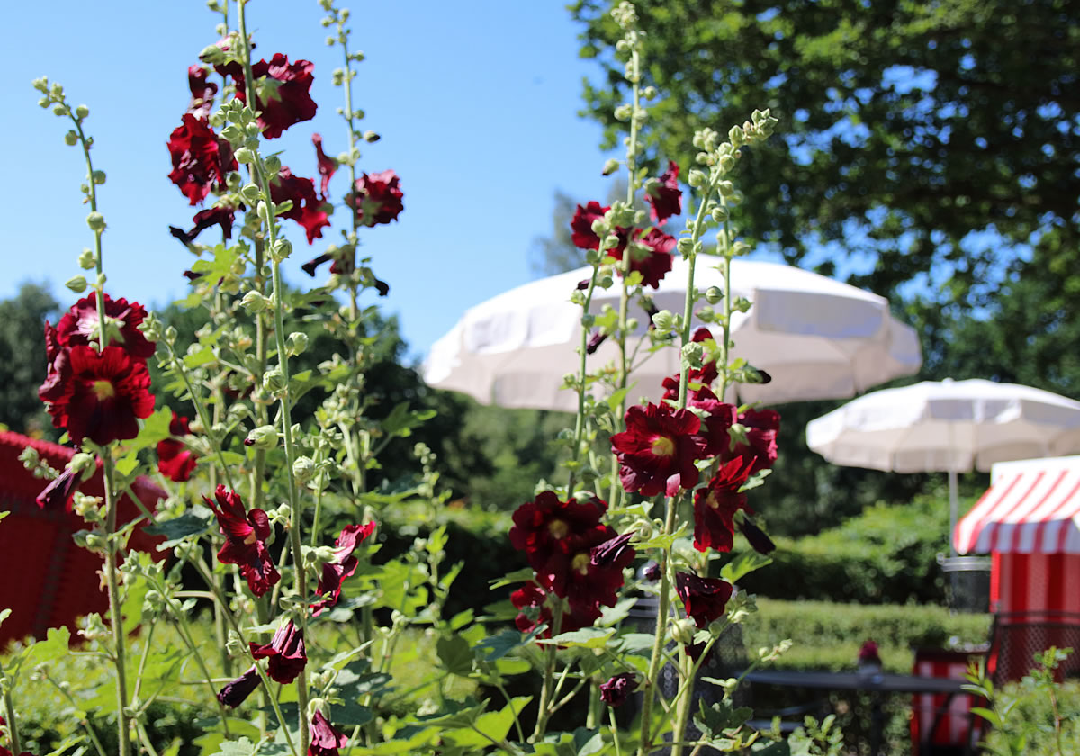 Morgenstimmung im Frühstücksgarten von Haus Fischerwiege