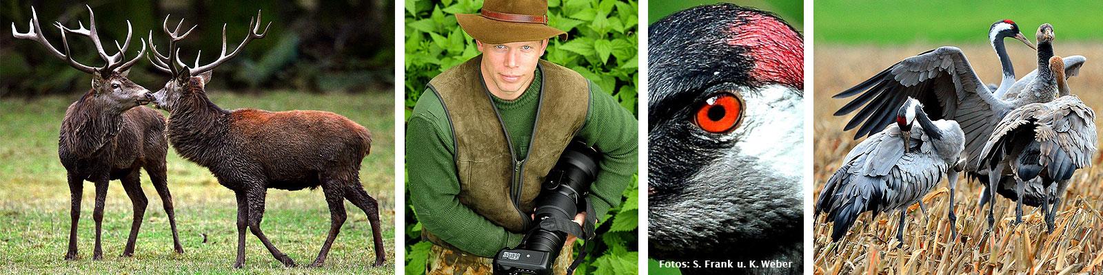 Hirsche, Kraniche und Wölfe beobachten